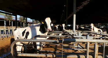 Reddito della stalla: c'è qualcosa di più importante del prezzo del latte