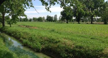 Pac: i vincoli per le azotofissatrici utilizzate nelle aree ecologiche (EFA)