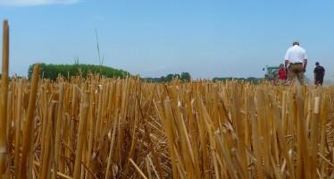Le priorità per l'impresa agricola che vuole rimanere sul mercato