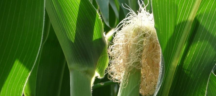 Agricoltura, via alla campagna di sottoscrizione delle assicurazioni 2016. Ecco le novità
