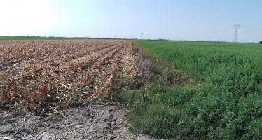 PSR Lombardia: via al bando per gli aiuti ai giovani agricoltori