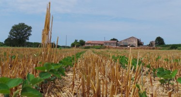 Si può coltivare la terra senza i titoli? E se si ha più terra rispetto ai titoli Pac?