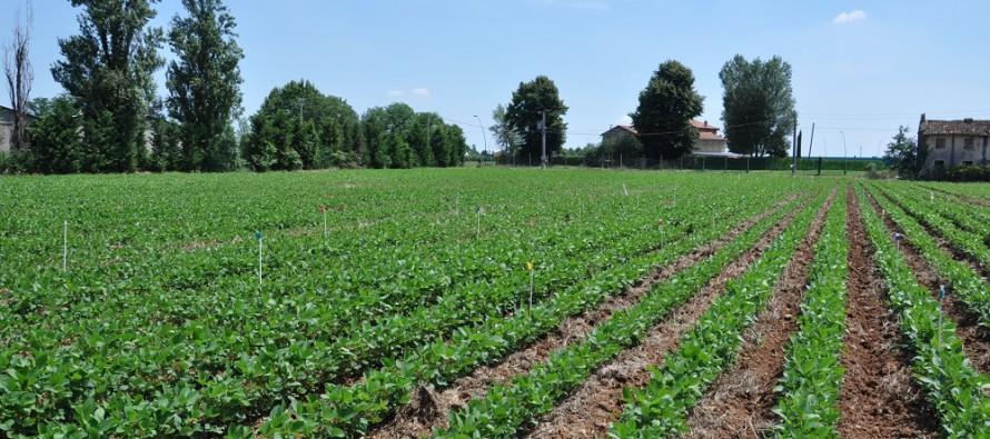 Aiuti Ismea: rifinanziato il pacchetto per il primo insediamento dei giovani agricoltori