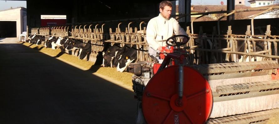 Insilato di mais e medica sono il mix ideale se si vuole produrre latte di alta qualità