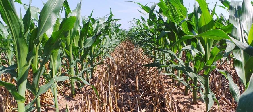 Il nuovo Pag Kverneland sull'innovazione per mais e soia nell'azienda Cavazzini