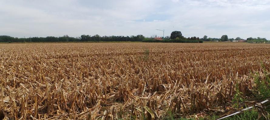 Quanto valgono i titoli Pac se un agricoltore inizia l'attività nel 2016?