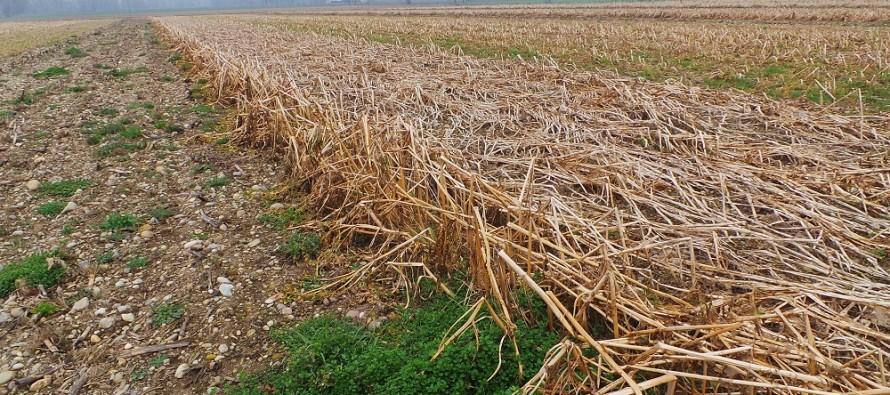 Misura 10 PSR: il premio previsto per le cover crops su quanti ettari viene erogato?