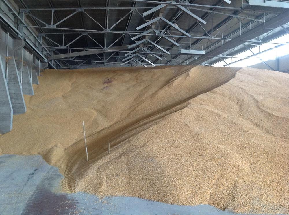 Uno dei magazzini refrigerati dove viene conservata la granella di mais.