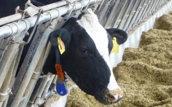 Allevamenti da latte in crisi di redditività: siamo sicuri che dipenda solo dal prezzo del latte?