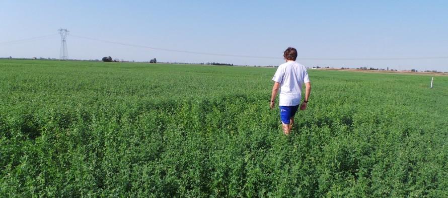 Ismea finanzia i giovani che subentrano in azienda agricola o che presentano un progetto di sviluppo