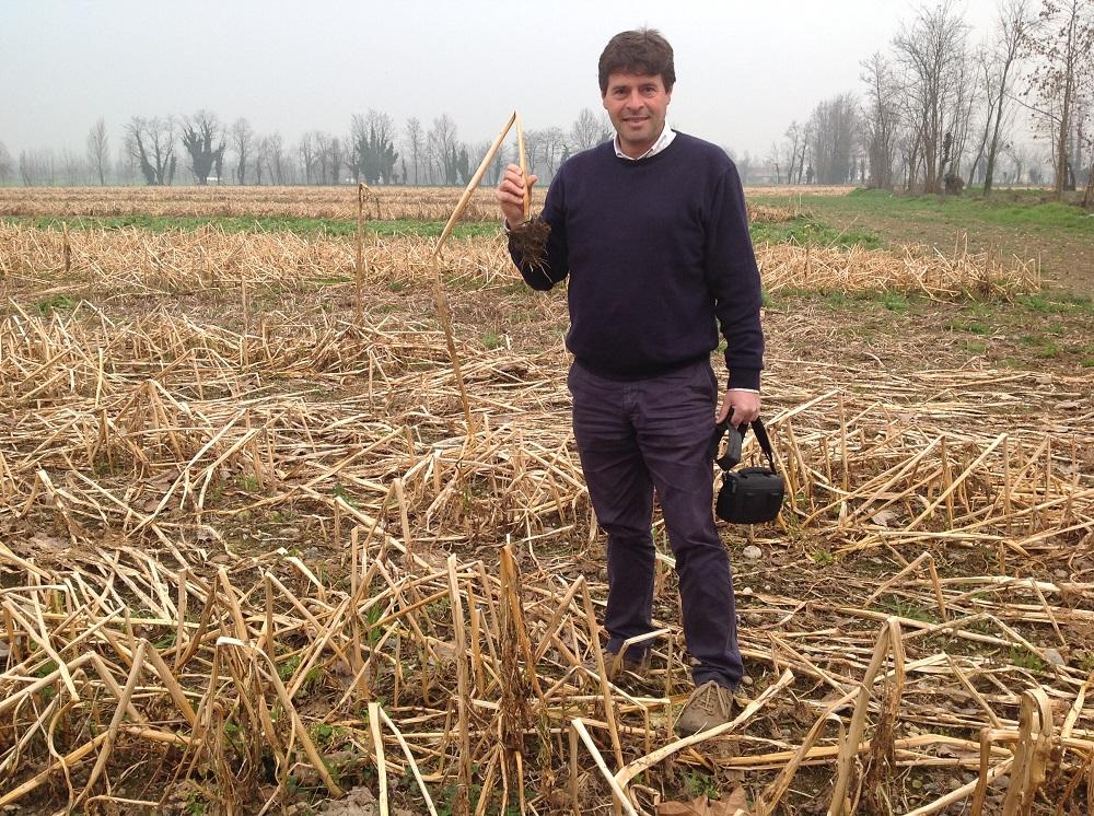 Paolo Montana con una pianta di senape, una cover crop geliva sulla quale si può entrare direttamente con la seminatrice da sodo.