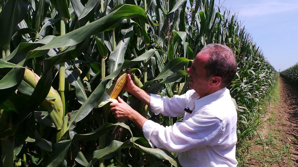 Luciano Lanza raggiunge produzioni record di granella di mais: lo scorso anno ha prodotto in media 198 ql/ha di granella secca.