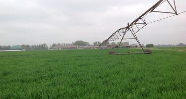 Cereali e soia: quanti quintali/ettaro bisogna produrre per pareggiare i costi di produzione?
