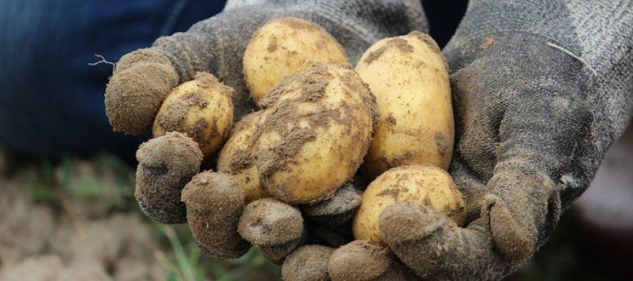 L'agricoltura italiana va riorganizzata e modernizzata. Le risorse ci sono, ma nessuno coordina il cambiamento