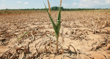 PAC, PSR, Glifosate: il fallimento delle nostre istituzioni, a danno dell'agricoltura