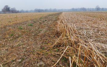 Su una stessa particella non si può fare la terza coltura: il grido d'allarme dalla Lombardia
