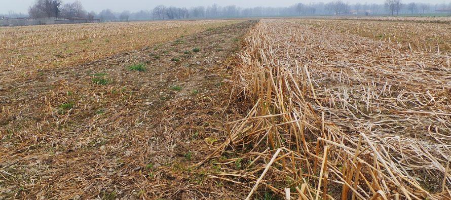 Pac, terza coltura e cover crops: la risposta della Regione Lombardia