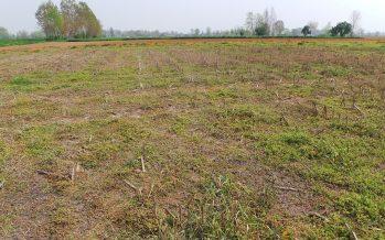 Pac: chi non coltiva percepisce il pagamento di base e incassa anche il greening