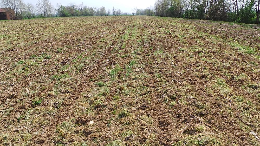 L'appezzamento dell'azienda Cortellini di Vescovato dove è passato il Kverneland Kultistrip per prepare le strisce di semina.