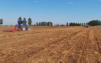InnoCORN Future, il nuovo percorso agronomico per un mais sostenibile per l'ambiente e il portafoglio