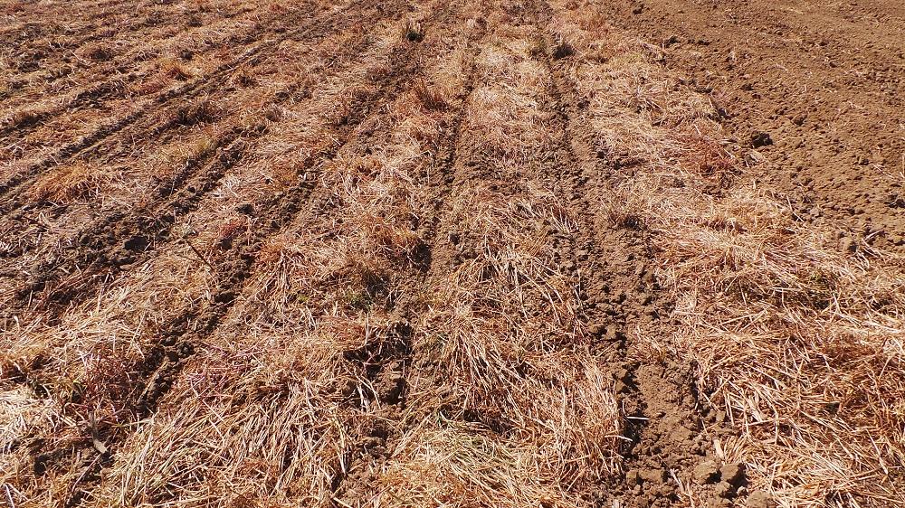 Ecco come si presenta il terreno preparato dal Kultistrip e pronto per semina.