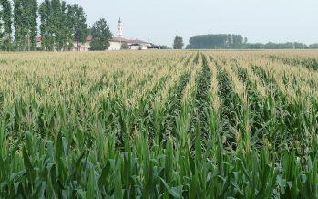 Diversificazione delle colture e aree ecologiche: come applicare il greening senza fare errori