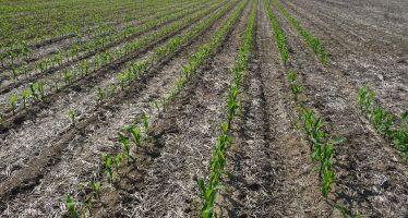 Agricoltura conservativa, non basta eliminare l'aratro. Ecco le altre pratiche da mettere in campo