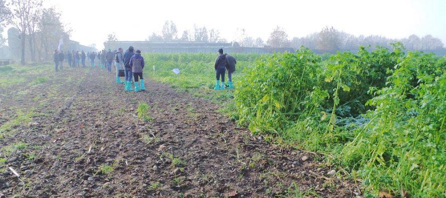 Avvicendamento, cover crops e terza coltura: occorre fare qualche modifica, in nome dell'agronomia
