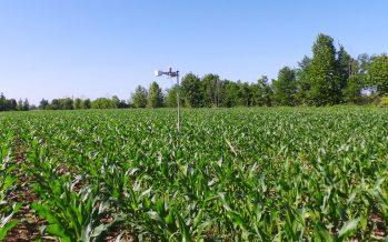 InnoCORN Future: anche a Cremona il mais su strip è alla pari con quello su aratura