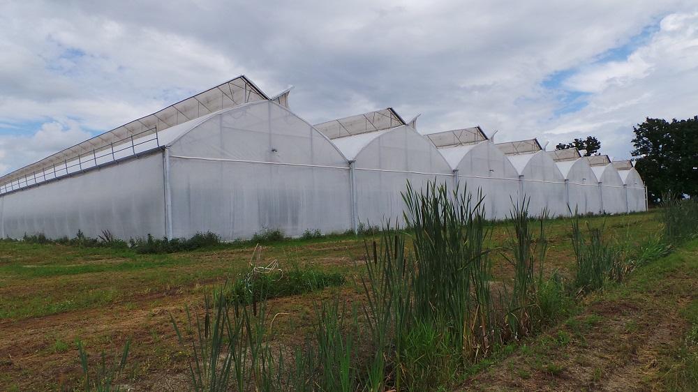 Le serre, molto tecnologiche, dove si coltiva il pomodoro occupano 10 mila metri quadri.