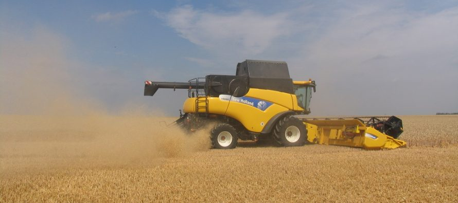 Prezzi bassi grano 2016: impariamo la lezione e cambiamo abitudini per le prossime semine