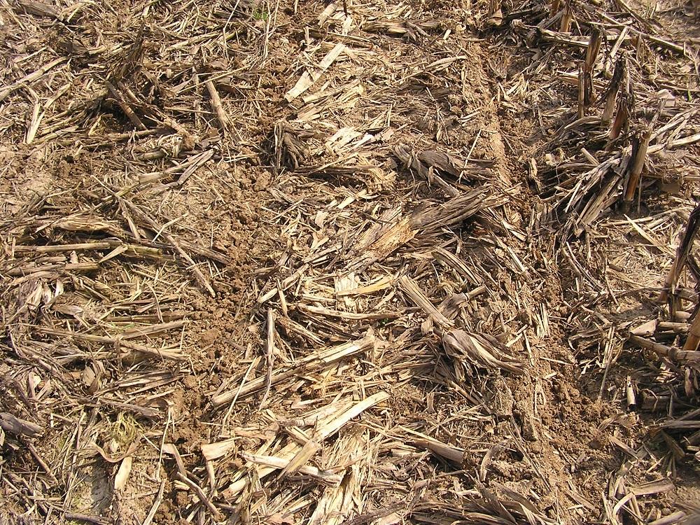 """I residui colturali che rimangono in superficie nei sistemi conservativi possono comportare una temporanea """"fame di azoto"""" da parte delle colture."""