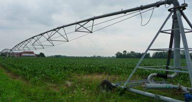 Concimi, irrigazione e difesa del mais: come agire in campo per evitare le micotossine