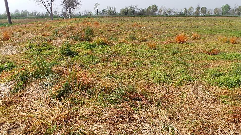 Queste erano le condizioni del terreno dove è stata effettuata la preparazione del letto di semina con Kultistrip e CLC di Kverneland.