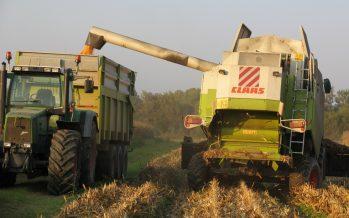 Il mais per ora è salvo dalle micotossine. Ma attenzione a epoca e modalità di raccolta