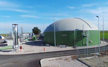 Biogas, il pretrattamento enzimatico per aumentare le rese e ridurre la quantità di biomassa vegetale