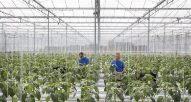 Bayer-Monsanto, il matrimonio del secolo e la pericolosa disinformazione sulla stampa