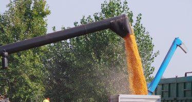 Frumento, accordo tra industria e agricoltori per la gestione condivisa dei prezzi