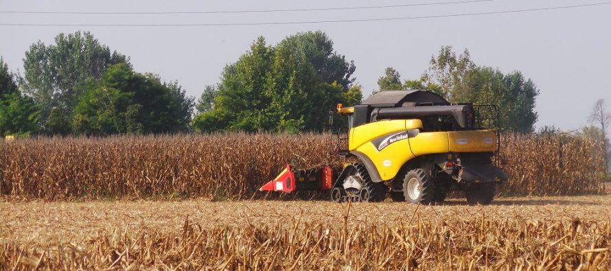 Raccolta del mais: con strip-till e minima lavorazione si fa più reddito