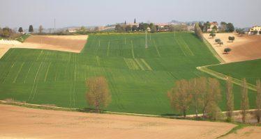 Pac: il caso di un piccolo agricoltore che vuole affittare i suoi terreni per i prossimi 5 anni