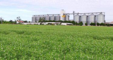 200 milioni di euro per i contratti di filiera: il Mipaaf stanzia dei finanziamenti da non perdere per i cereali