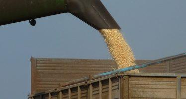 I prezzi di cereali, latte e suini riprendono vigore: pensiamo positivo e avanti con l'innovazione!