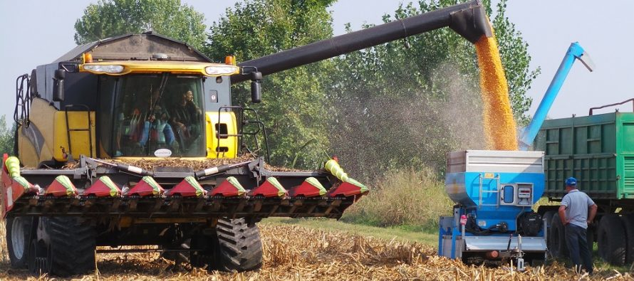 Cereali, la ricetta per convivere con la volatilità dei prezzi di mercato