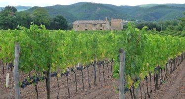 Dichiarazioni vitivinicole: per il 2016 sarà unica. Presentazione entro il 15 dicembre