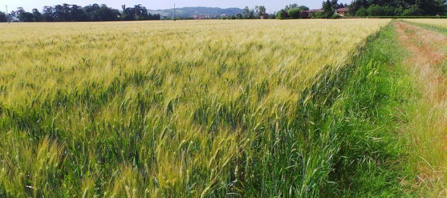 L'affitto dei terreni agricoli continua ad aumentare, ma i prezzi medi sono sotto ai 20mila euro/ettaro