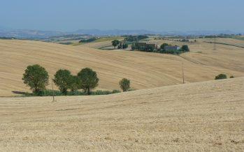 Prezzi cereali: cosa è successo da agosto a novembre e cosa possiamo aspettarci per il prossimo anno