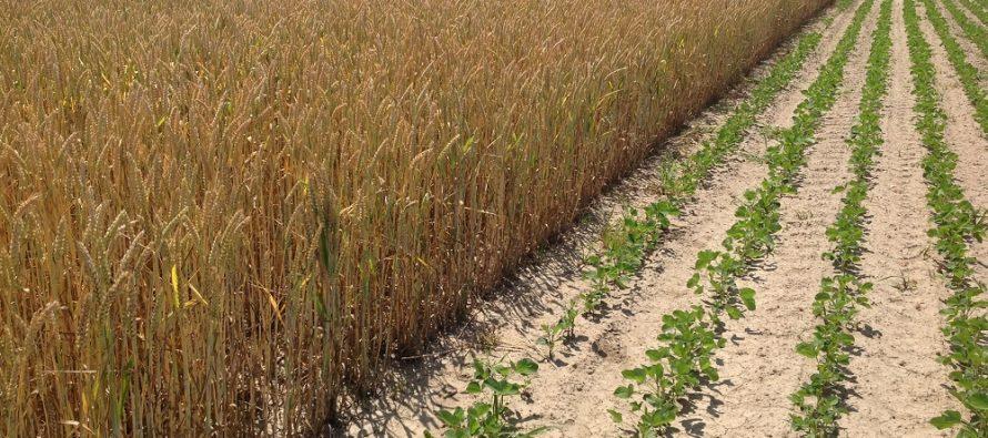 Pac, greening: la diversificazione delle colture è obbligatoria solo dai 10 ettari in su