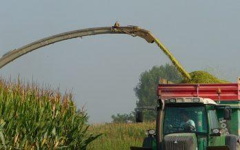 Puntiamo sulla doppia coltura: come massimizzare le rese di loietto italico e mais