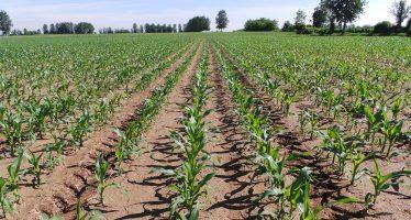 L'agricoltura non ha bisogno di nuove leggi, ma di dirigenti capaci