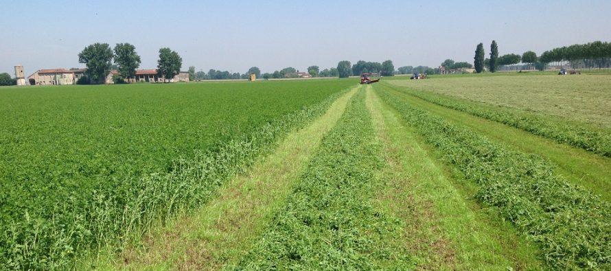 Pac: erba medica, trifoglio e tutte le leguminose foraggere possono entrare nel 5% di EFA